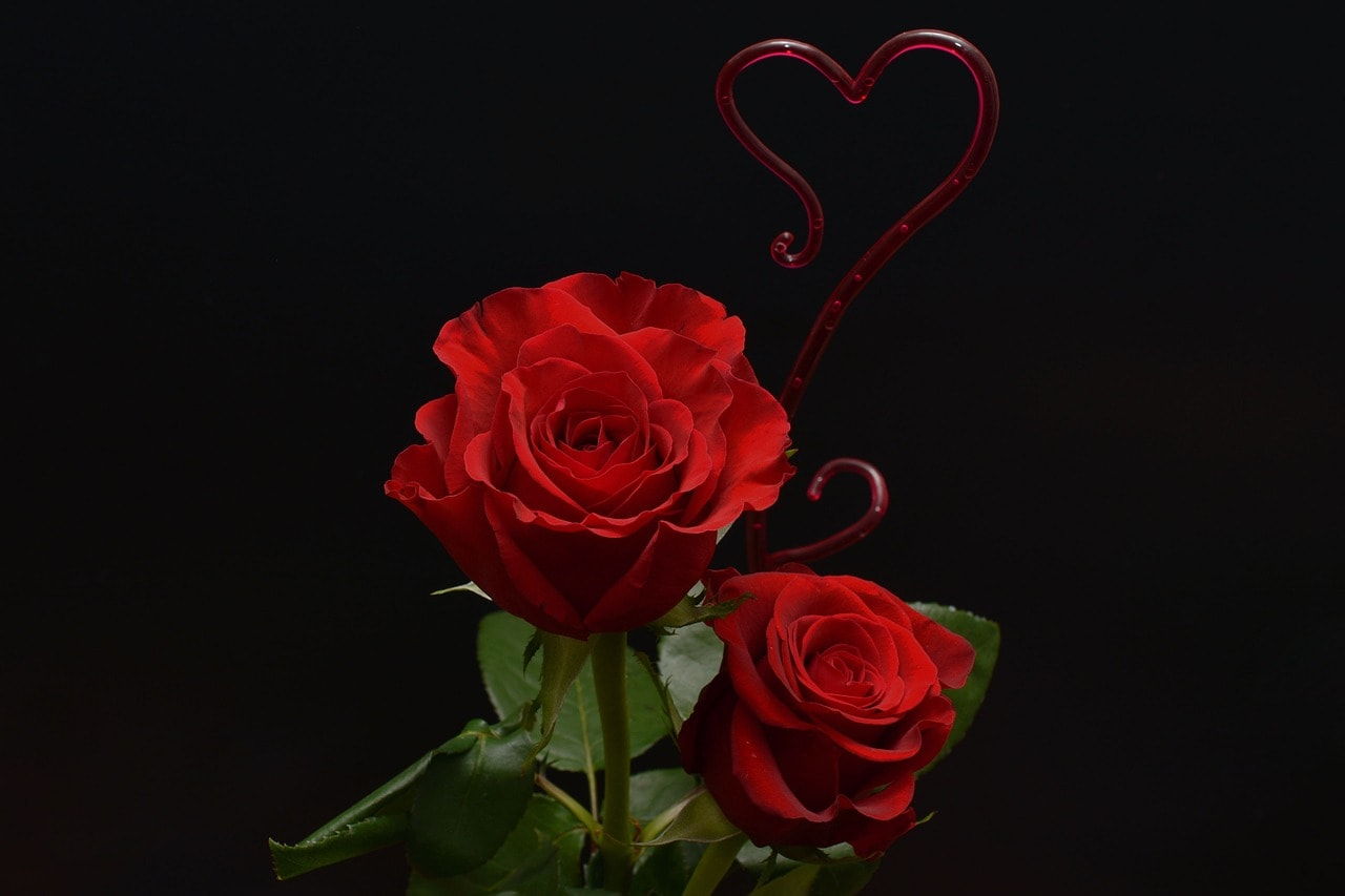 Happy Rose Day 2018 Images Download